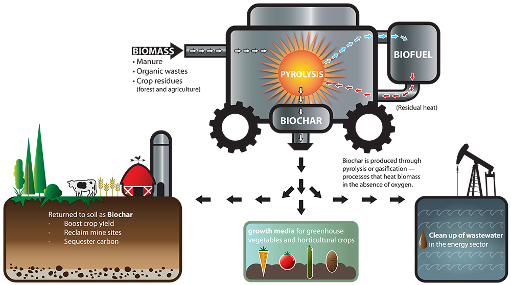 biochar-infograph-showing-feedstocks-and-uses