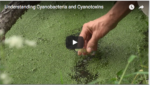video on cyanotoxins and cyanobacteria