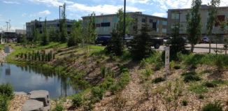 low-impact-development-stormwater-management