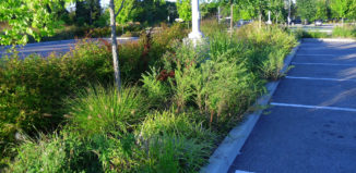 LID stormwater system