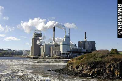 photo of the pulp plant