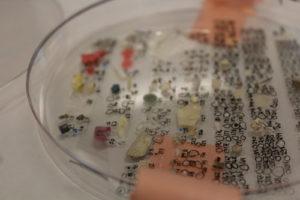 microplastics-on-a-dish
