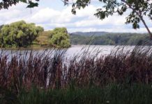 cootes-wetlands-image