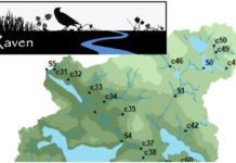 Raven-graphic-image