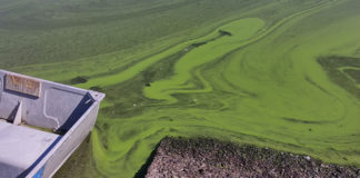 quamichan-lake-algal-bloom