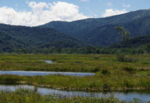 woodland and stream