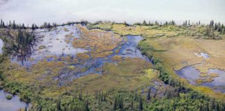 Yukon-wetlands