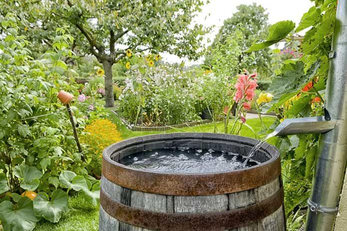 rain-barrel stock image