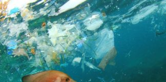 Fish-and-plastics-ocean-stock-image