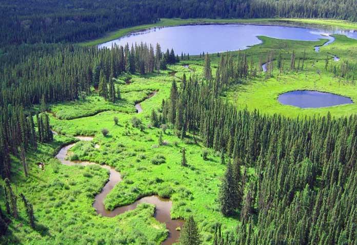wetlands-natural-assets-stock-image